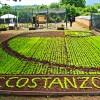 analist_group_Istituto_costanzo_decollatura_volo_drone_ortaggi