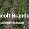 Azienda Agricolt Brandoni